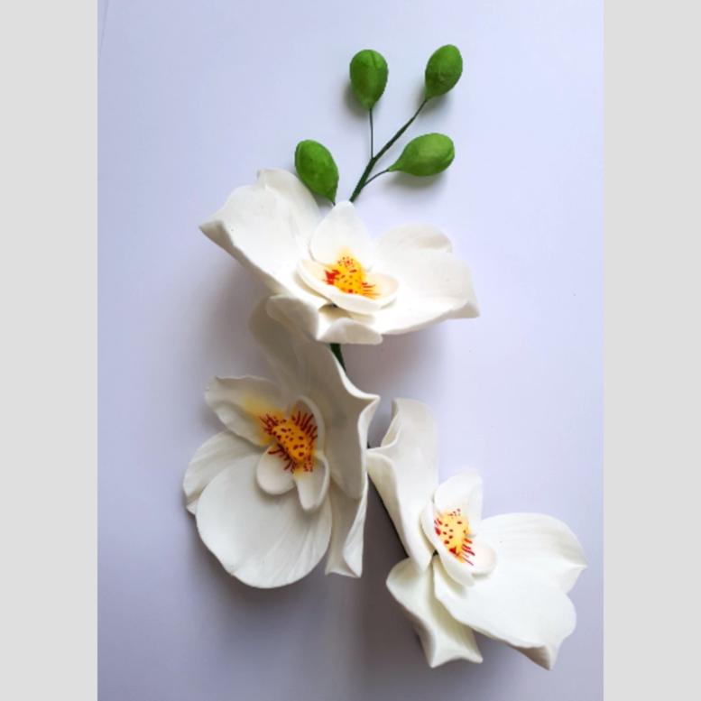 Цукрова прикраса Гілочка білої орхідеї з зеленими бутонами